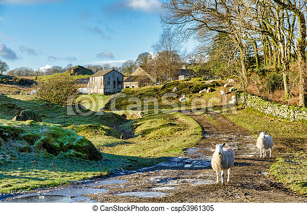 Two sheep on a farm in Winter - csp53961305
