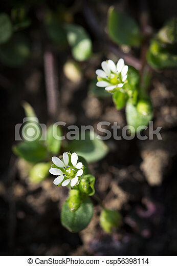 two small white flowers - csp56398114