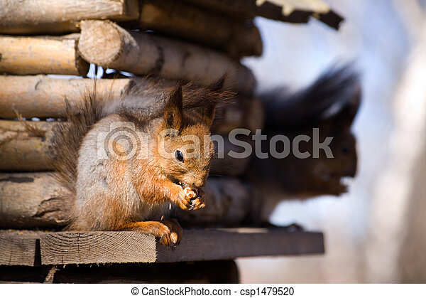 Two squirrels - csp1479520