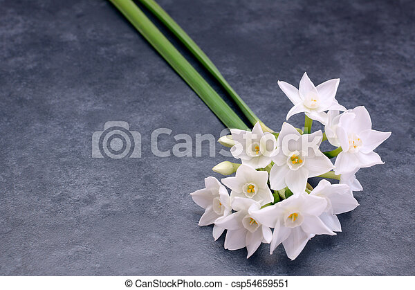 Two stems of small white narcissus flowers - csp54659551