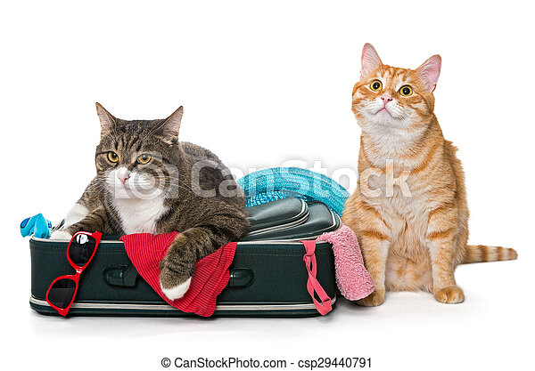 Two striped cat lying with a suitcase - csp29440791
