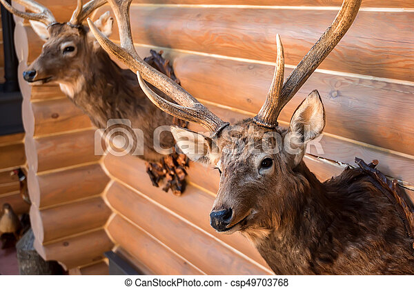 Two Stuffed Deer Heads On Wall Close Up Trophy Of Two Stuffed Deer Heads Hanging On Wooden Wall Canstock