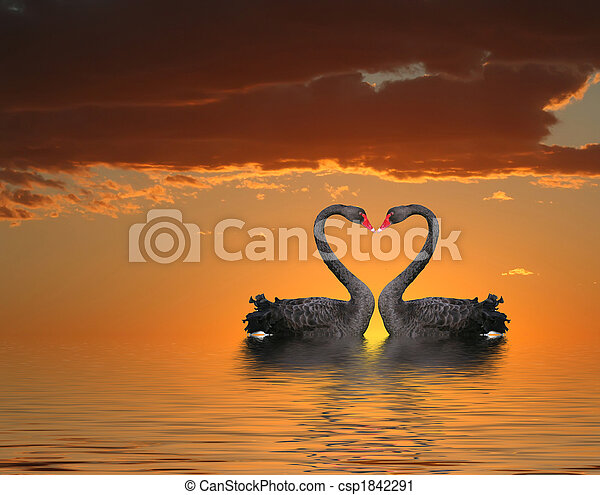 Two Swans at Sunset - csp1842291