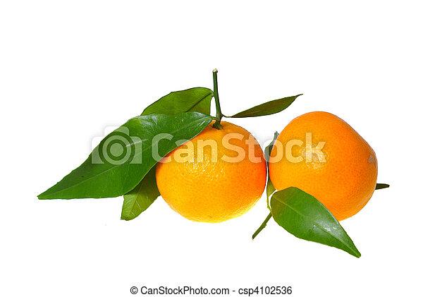 two tangerines - csp4102536