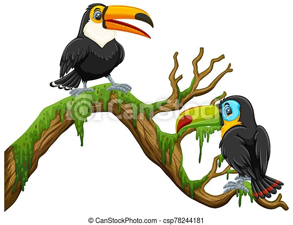 Two toucan birds standing on the branch - csp78244181