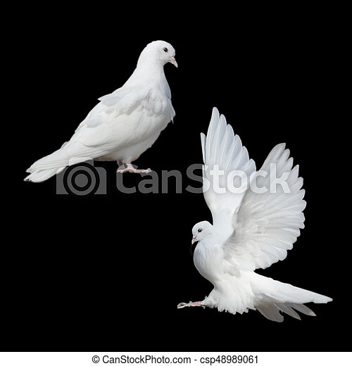 Two White Doves On A Black Background
