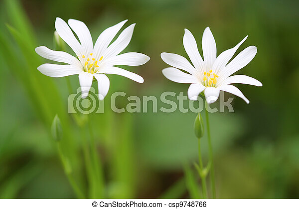 Two White Flowers - csp9748766