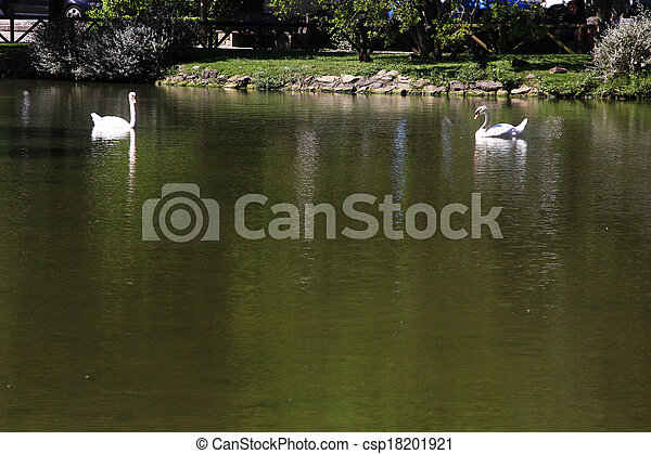 two white swans on a tranquil pond - csp18201921