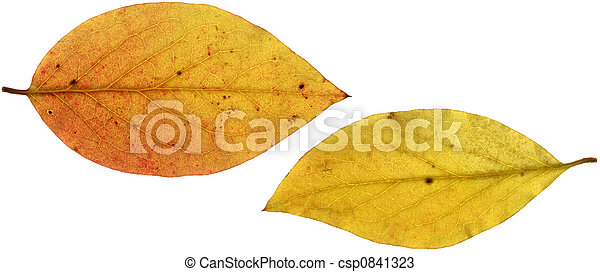 Two Yellow Leaves XXL   - csp0841323
