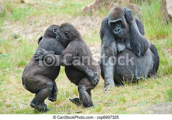 Two young gorillas dancing - csp6697325