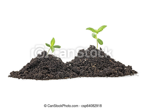 Two young plant with humus isolated on white background - csp64082918