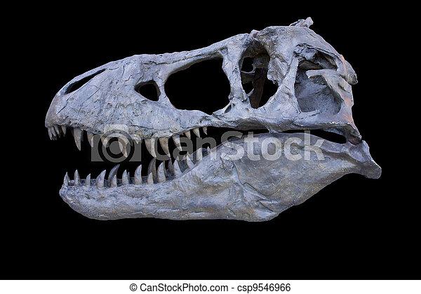 tyrannosaurus, freigestellt, totenschädel - csp9546966
