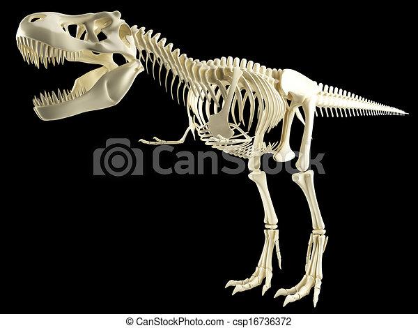 Tyrannosaurus  T Rex skeleton - csp16736372