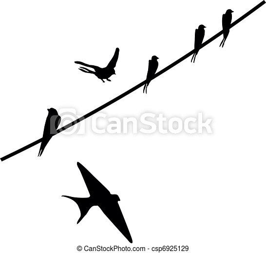 uccelli - csp6925129