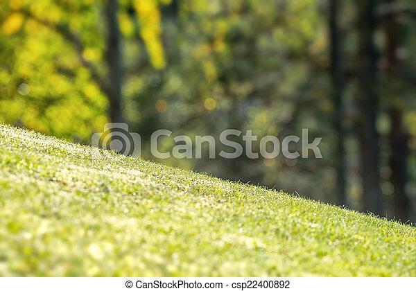 udvar, fű, vibráló, lejtős, zöld - csp22400892