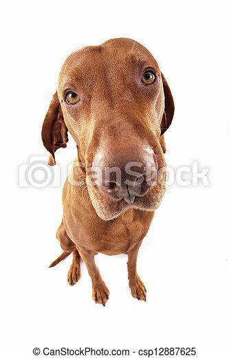 ultra wide angle dog portrait - csp12887625