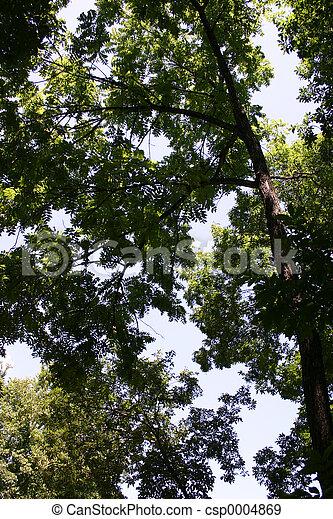Under a walnut tree - csp0004869