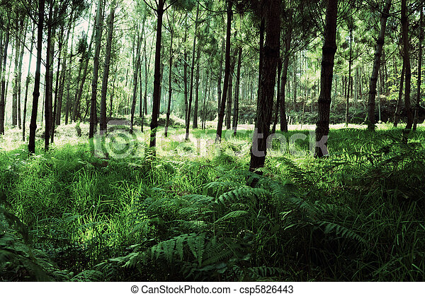 Under Greeny Trees II - csp5826443