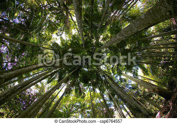 Under The Canopy - csp6764557 & Under the canopy. Tall trees in a tropical rainforest picture ...