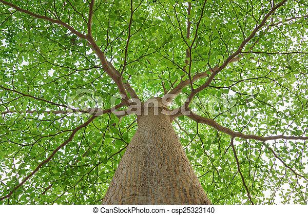 under the tree - csp25323140