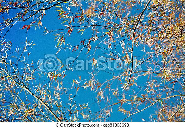 Under the tree - csp81308693