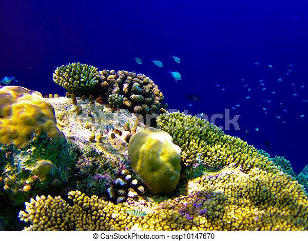 under water world at Maldives - csp10147670