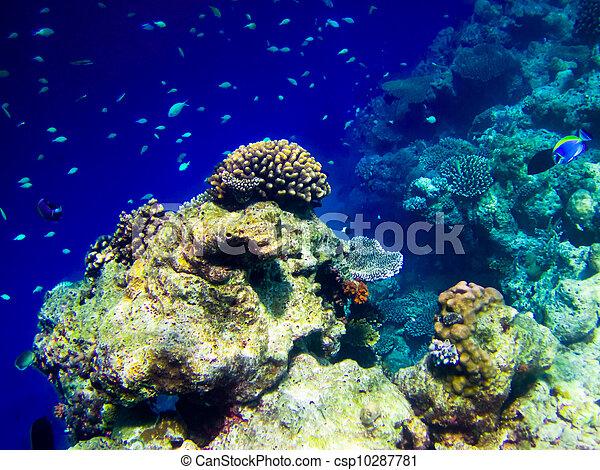 under water world at Maldives - csp10287781