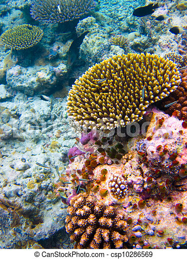 under water world at Maldives - csp10286569