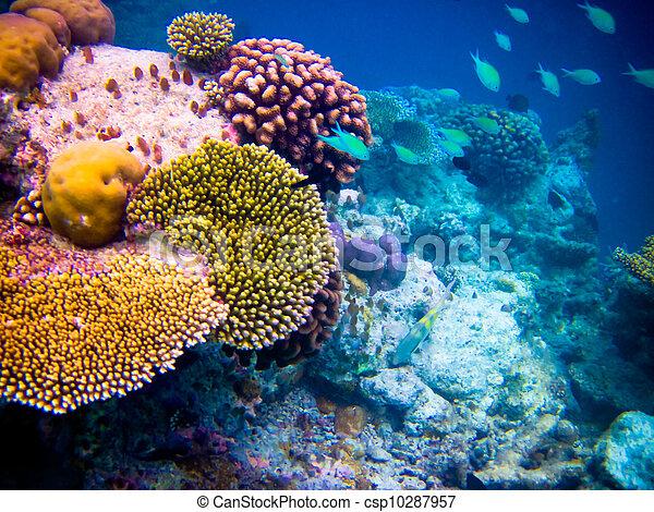 under water world at Maldives - csp10287957