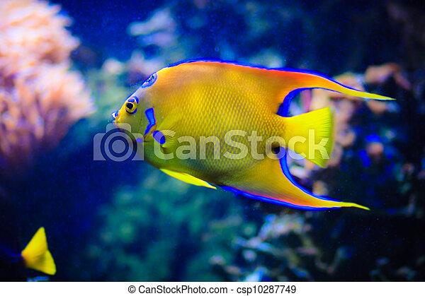 under water world at Maldives - csp10287749