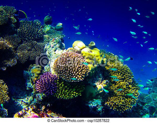 under water world at Maldives - csp10287822