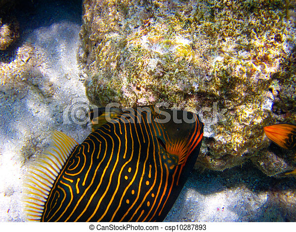 under water world at Maldives - csp10287893