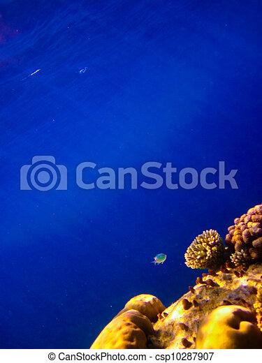 under water world at Maldives - csp10287907