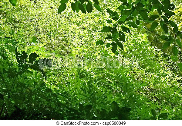 undergrowth - csp0500049