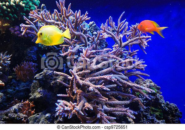 underwater fish - csp9725651