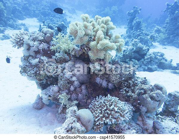 Coral arrecife en el fondo del mar tropical, bajo el agua. - csp41570955