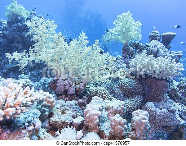 Coral arrecife en el fondo del mar tropical, bajo el agua. - csp41570957