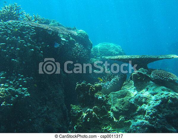 Underwater Garden - csp0011317