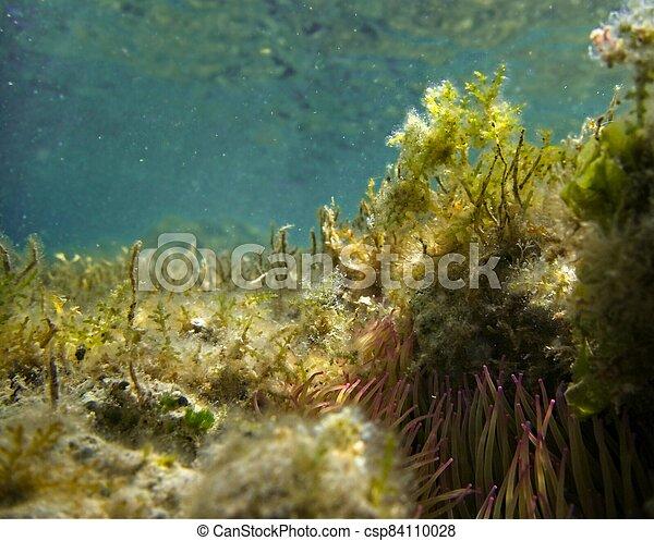 Underwater Garden - csp84110028