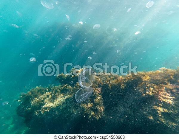 underwater jellyfish underwater sea sunlight blue and coral - csp54558603