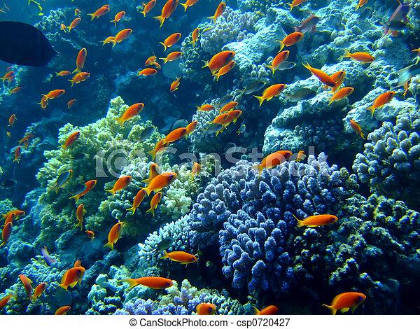 Underwater landscape - csp0720427