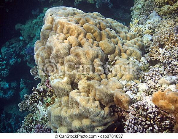 Underwater landscape - csp0784637