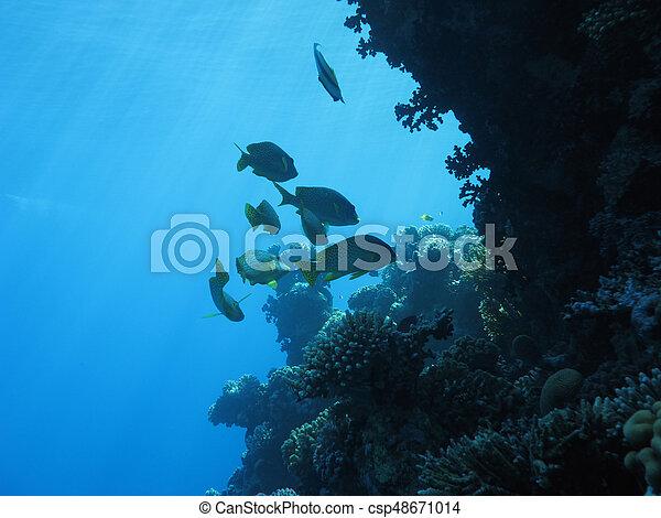Underwater landscape - csp48671014