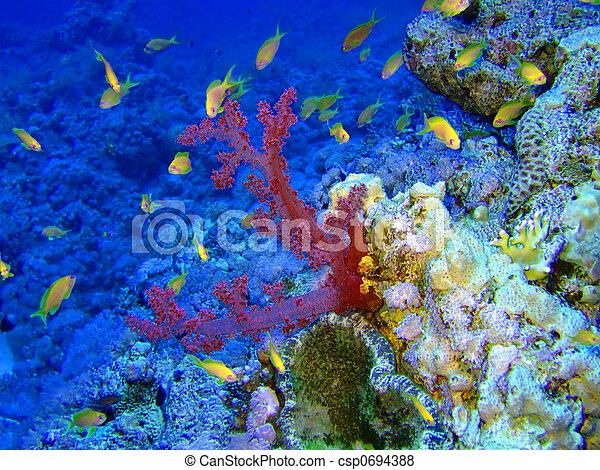 Underwater landscape - csp0694388