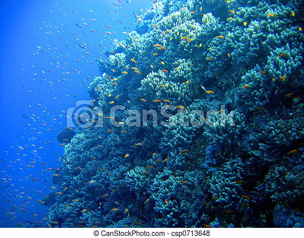 Underwater landscape - csp0713648