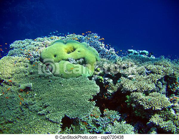Underwater landscape - csp0720438