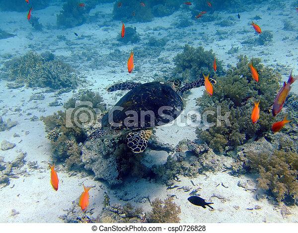 Underwater landscape - csp0726828