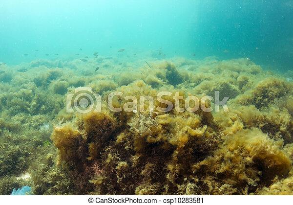 Underwater landscape - csp10283581