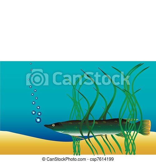 Underwater landscape - pike hiding in the weeds - csp7614199