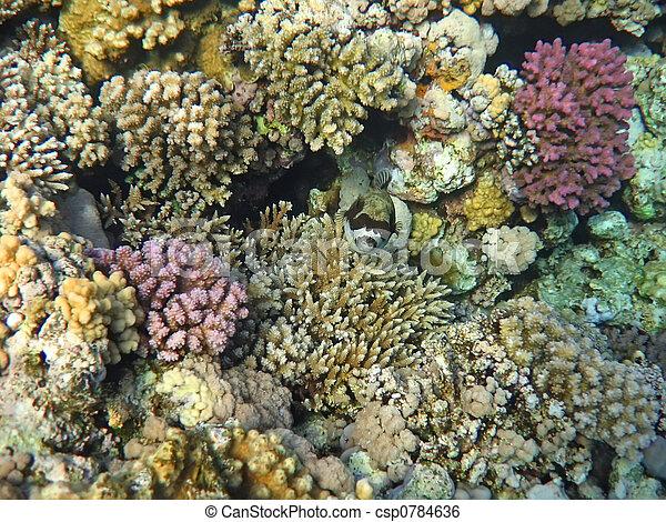Underwater landscape - csp0784636